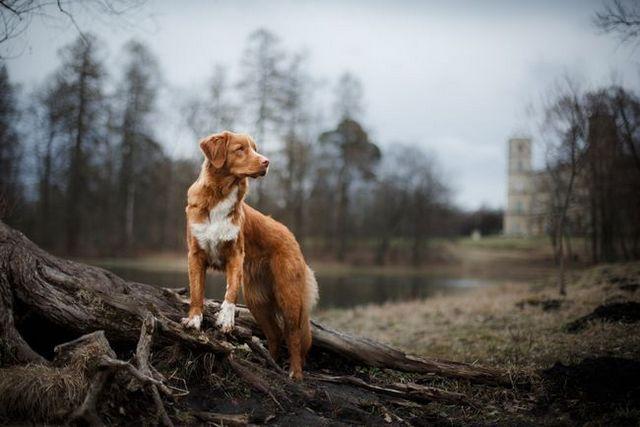 10 Dog-friendly national parks you've gotta visit