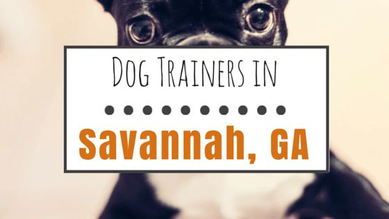 10 Dog trainers in savannah, ga worth checking out