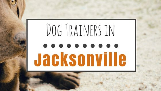 10 Reputable dog trainers in jacksonville, fl