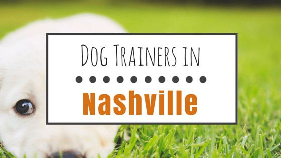 10 Reputable dog trainers in nashville, tn