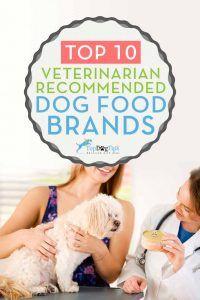 Top Vet Recommended Dog Food Brands