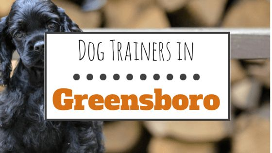 10 Wonderful dog trainers in greensboro, nc