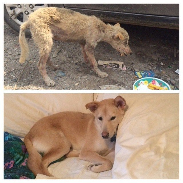before and after pet adoption