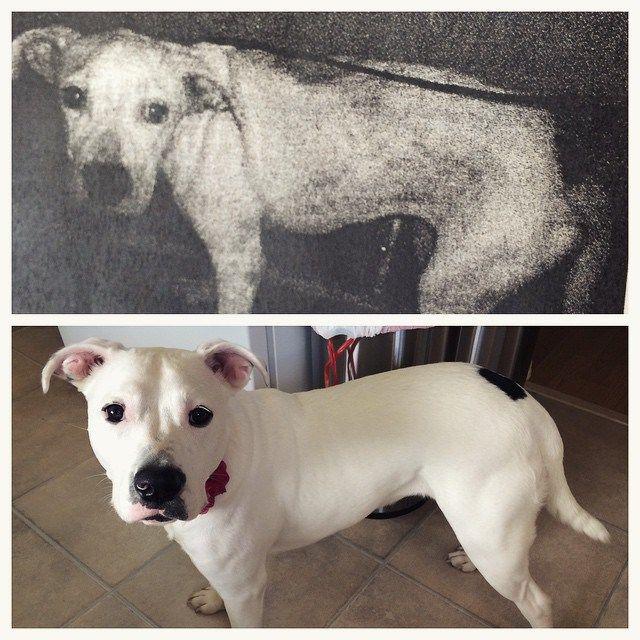 before after adoption dog