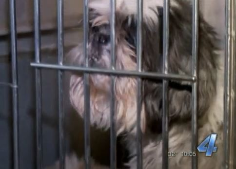 124 Dogs seized from oklahoma city puppy mill