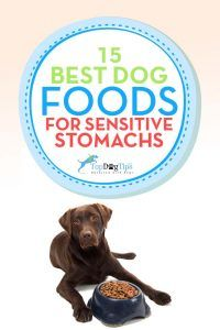 Best Sensitive Stomach Dog Foods for Upset Stomachs