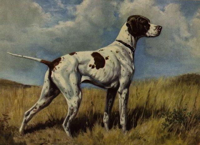 25 Extinct dog breeds you never knew existed