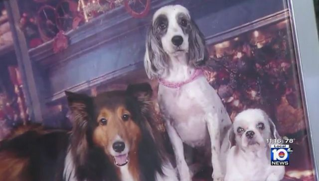 3 Dogs dead after a trip to their south florida groomer