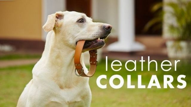 5 Best leather dog collars (including a few handmade options)