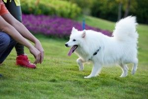 5 Obedience commands all dogs need to know