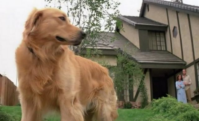 5 Scary movies for animal lovers (hint: the dog lives!)