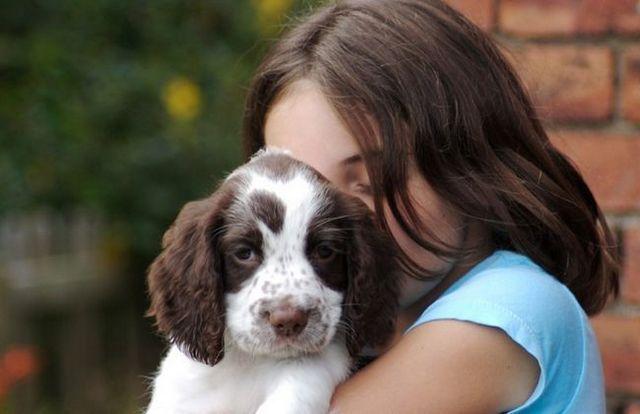 puppy whining header