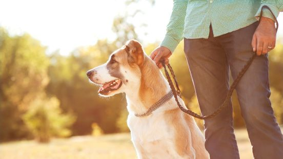 5 Ways to build a better relationship with your dog