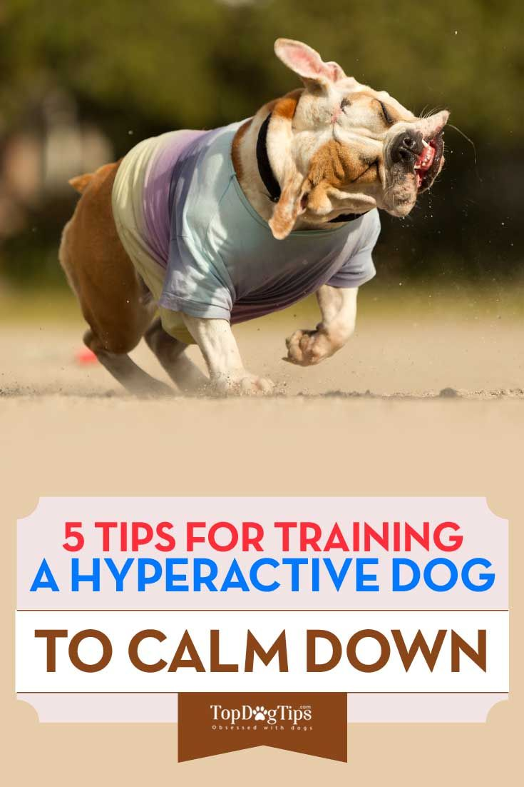 How to Train a Hyperactive Dog to Calm Down