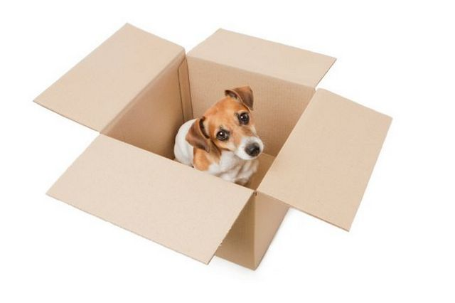 6 Questions your pets ask during a move
