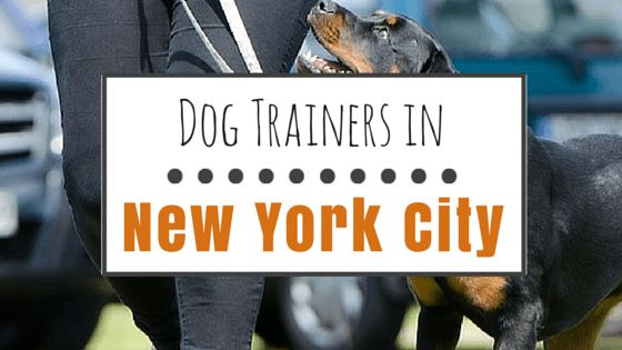 6 Top-of-class dog trainers in nyc