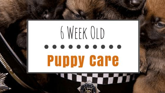 6 Week old puppy care: essential training & supplies