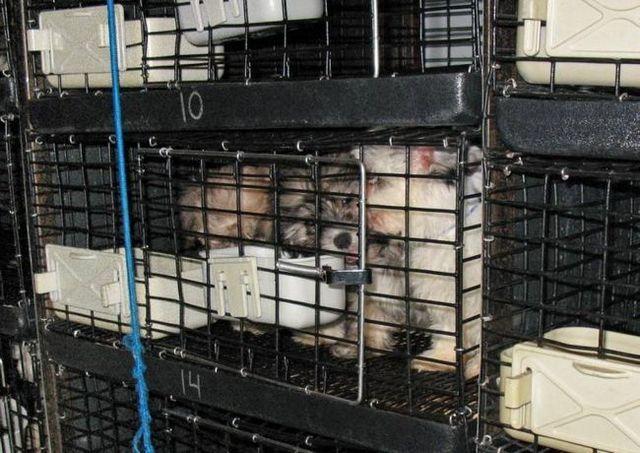 67 Puppies found crammed inside van behind a new jersey pet store