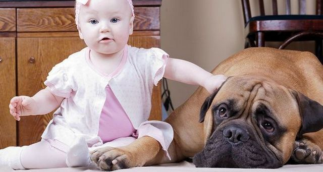 7 Ways your dog can help with your new baby