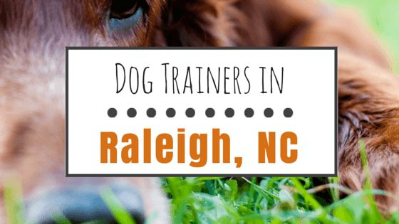 8 Awesome dog trainers in raleigh, nc