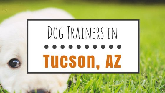 8 Popular dog trainers in tucson, az