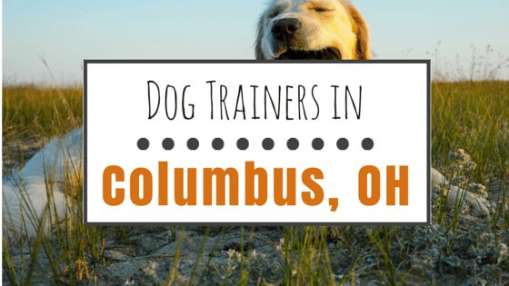 9 Dog trainers in columbus, oh that we recommend