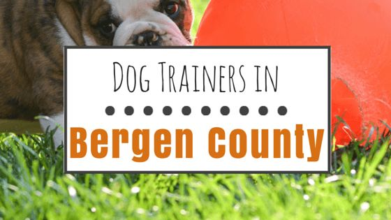 9 Great options for dog training in bergen county, nj