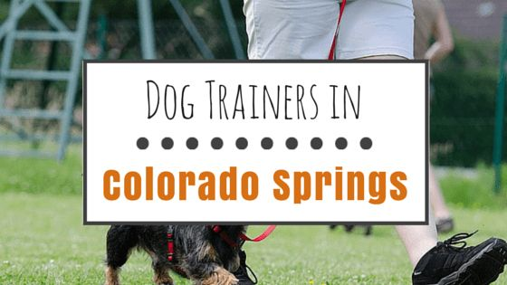 9 Highly recommended dog trainers in colorado springs