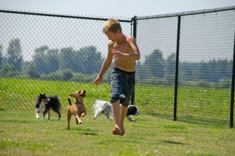 Dog playing with boy in kennel
