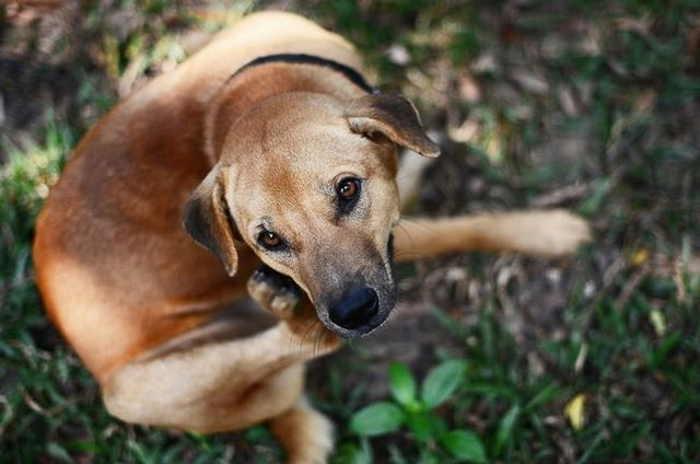 A natural approach to skin conditions and flea prevention