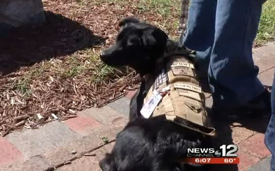Active duty marine barred from buffet because of service dog