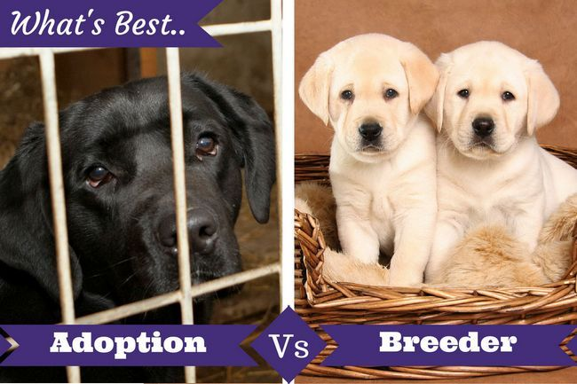 Adoption from shelter vs. Buying from a breeder: what's best for you?