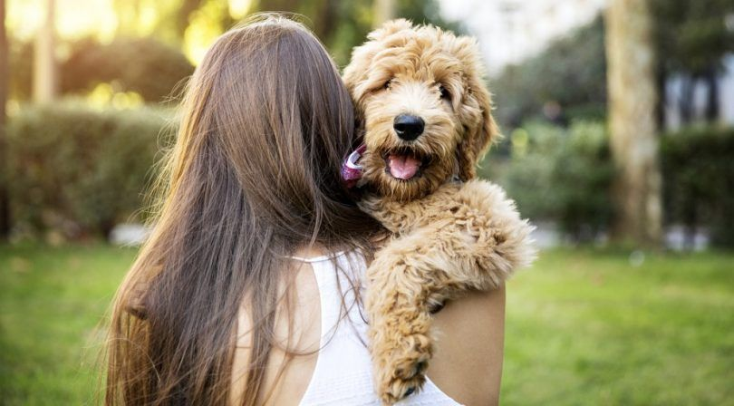 Allergy free dogs: 5 breeds that won't sneeze on you
