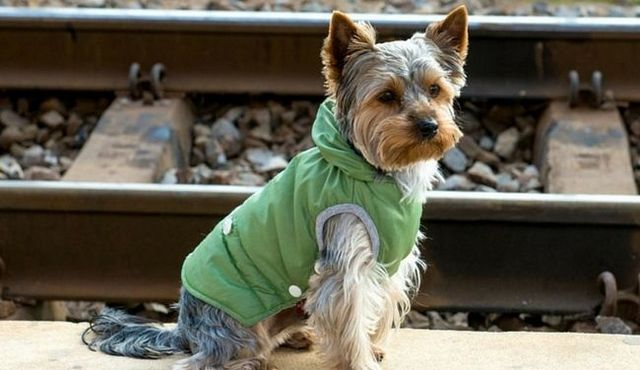 Amtrak goes pet-friendly: all aboard the puppy train