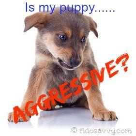 An aggressive puppy?
