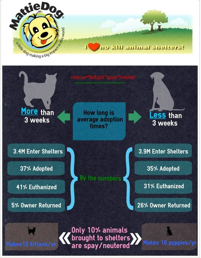 Animal adoption figures infographic