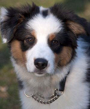 Aquarius (january 21 – february 19)
