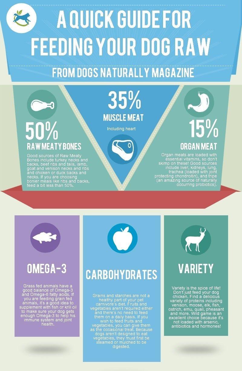 Dog eating raw-infographic