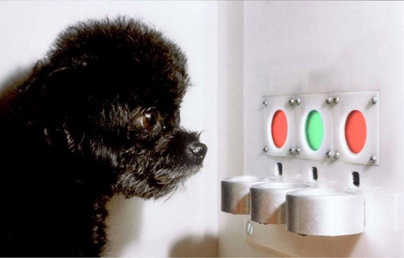 Are dogs color blind: the question only a dog could answer