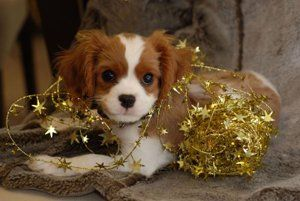 Aries (march 21 – april 20)