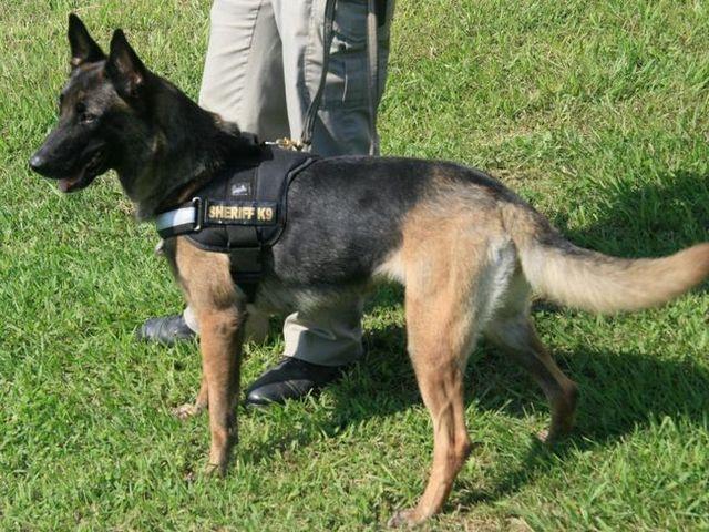 Arkansas police dog dies in hot patrol car