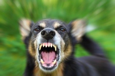 Ask the trainer: dealing with aggression in dogs