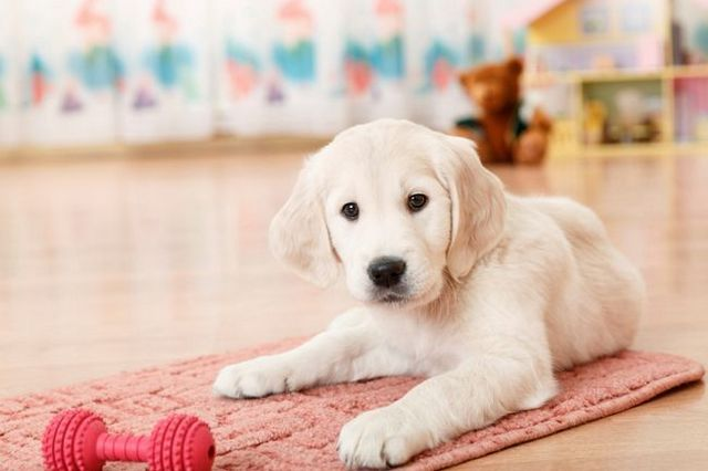 Ask the trainer: dog socialization checklist