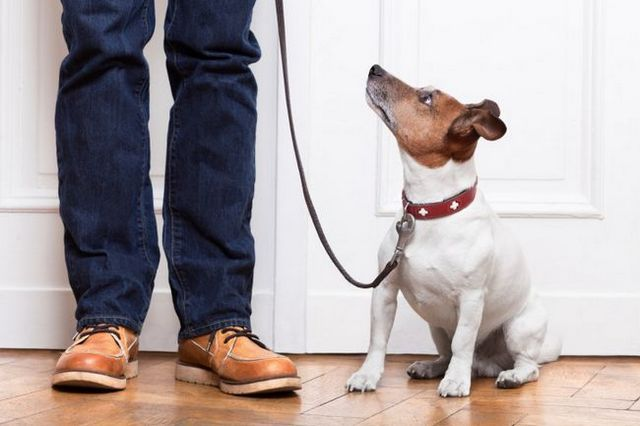 Ask the trainer: dog training cheat sheet