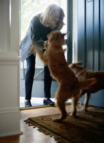 Ask the trainer: how do I teach my dog not to jump on people?