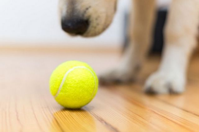 Ask the trainer: how to play fetch with your dog