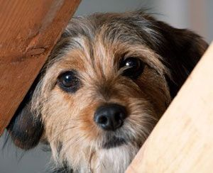 Ask the trainer: keeping the dogs calm in a chaotic household