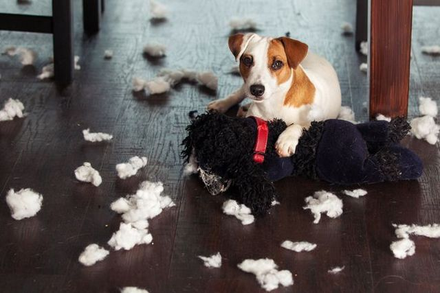 Ask the trainer: my dog destroys everything when he's home alone!