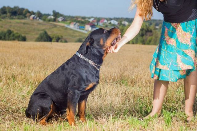 Ask the trainer: overcoming your dog's stereotypes