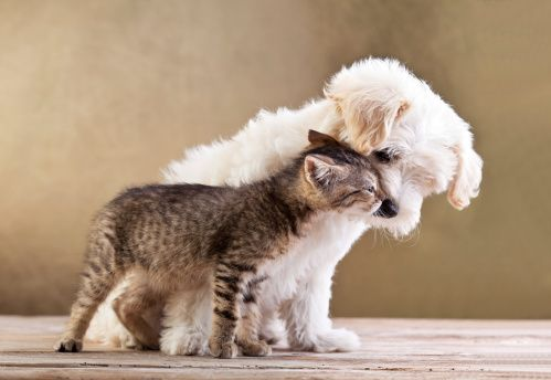 Ask the trainer: teaching the dog to be nice to the family cat (with video!)